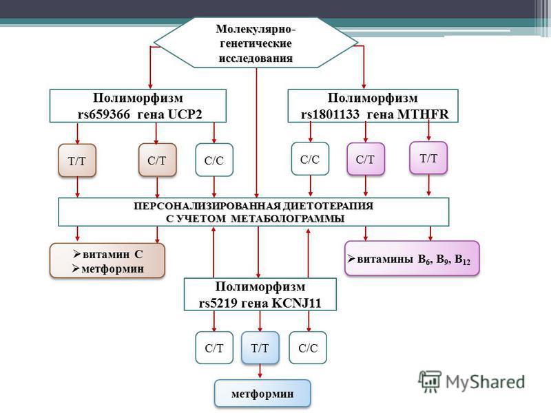 Полиморфизм rs659366 гена UCP2 Полиморфизм rs1801133 гена MTHFR T/T C/C C/T ПЕРСОНАЛИЗИРОВАННАЯ ДИЕТОТЕРАПИЯ С УЧЕТОМ МЕТАБОЛОГРАММЫ С УЧЕТОМ МЕТАБОЛОГРАММЫ C/C T/T C/T Молекулярно- генетические исследования витамины B 6, B 9, B 12 Полиморфизм rs5219