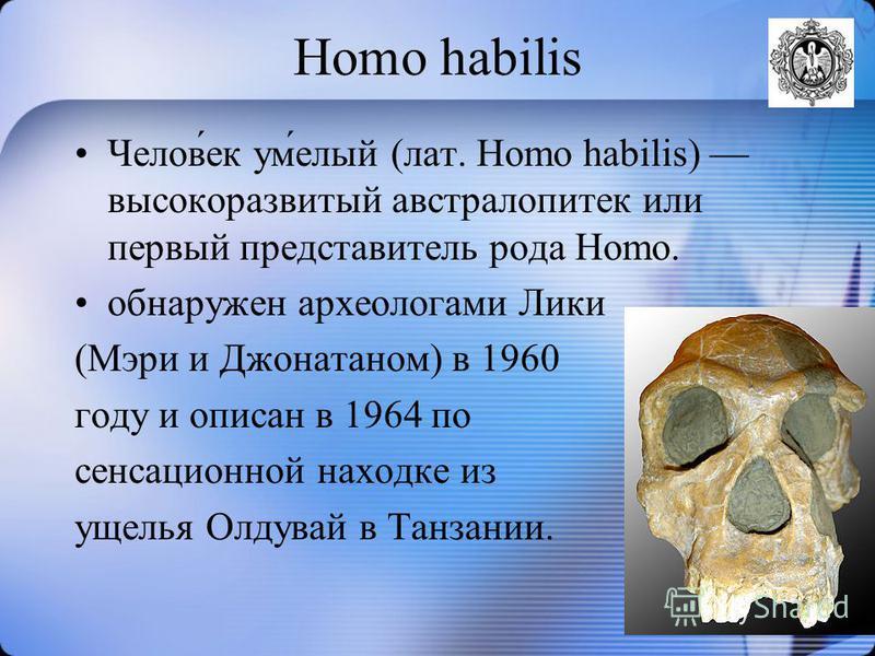 Homo habilis Челов́ек ум́белый (лат. Homo habilis) высокоразвитый австралопитек или первый представитель рода Homo. обнаружен археологами Лики (Мэри и Джонатаном) в 1960 году и описан в 1964 по сенсационной находке из ущелья Олдувай в Танзании.