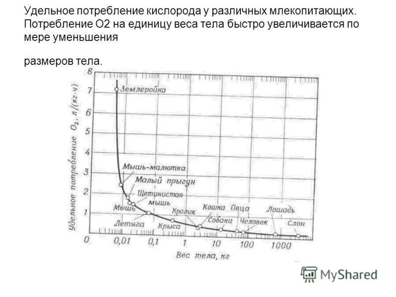 Удельное потребление кислорода у различных млекопитающих. Потребление О2 на единицу веса тела быстро увеличивается по мере уменьшения размеров тела.