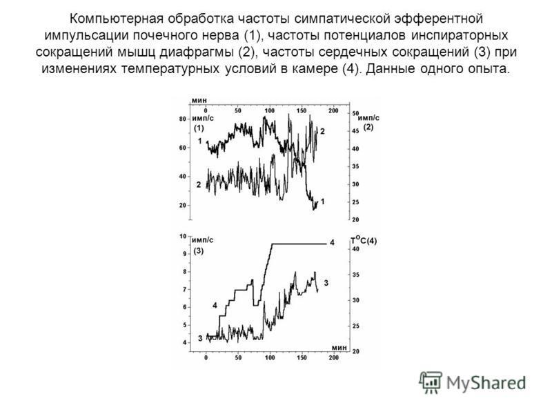 Компьютерная обработка частоты симпатической эфферентной импульсации почечного нерва (1), частоты потенциалов инспираторных сокращений мышц диафрагмы (2), частоты сердечных сокращений (3) при изменениях температурных условий в камере (4). Данные одно