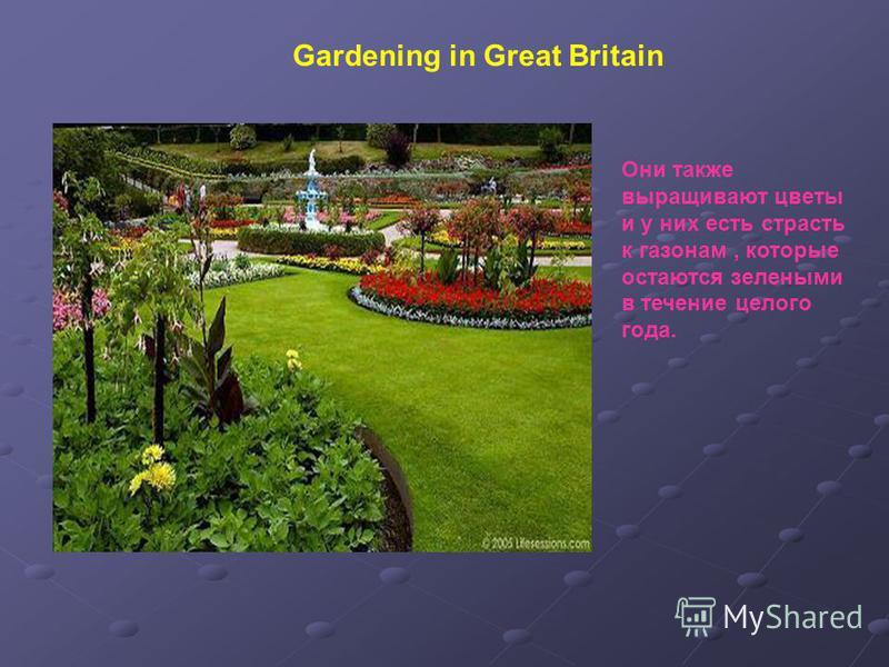 Они также выращивают цветы и у них есть страсть к газонам, которые остаются зелеными в течение целого года. Gardening in Great Britain