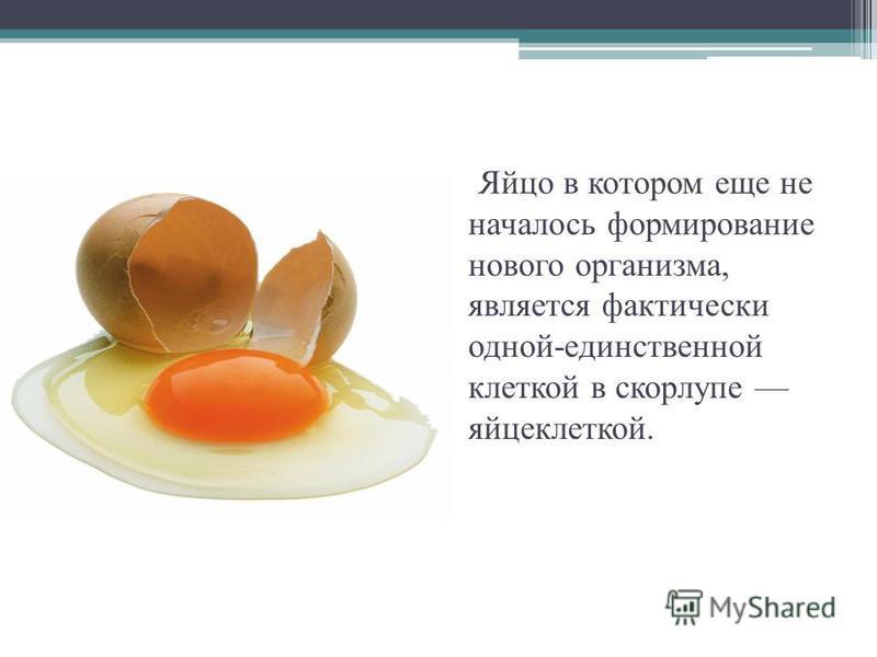 Яйцо в котором еще не началось формирование нового организма, является фактически одной-единственной клеткой в скорлупе яйцеклеткой.