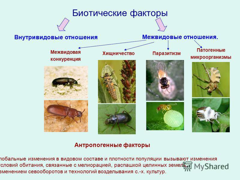 Внутривидовая межвидовая (между особями одного вида) ( между особями разных