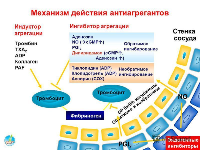 40 АНТИАГРЕГАНТЫ: классификация 1 класс: Ингибиторы ЦОГ-1 (снижают образование Tx A2). ацетилсалициловая кислота (АСК) 2 класс: Активаторы аденилциклазы (повышают образование Pg I2 - цАМФ) Курантил Курантил ® (дипиридамол) 3 класс: Антагонисты аденоз
