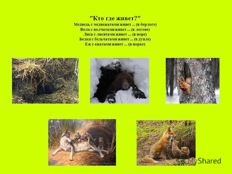 Кто где живет? Медведь с медвежатами живет... (в берлоге) Волк с волчатами живет... (в логове) Лиса с лисятами живет... (в норе) Белка с бельчатами живет... (в дупле) Еж с ежатами живет... (в норке)