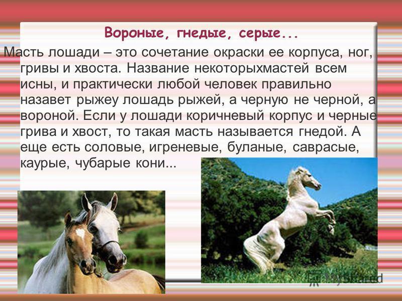 Вороные, гнедые, серые... Масть лошади – это сочетание окраски ее корпуса, ног, гривы и хвоста. Название некоторых мастей всем исны, и практически любой человек правильно назовет рыжею лошадь рыжей, а черную не черной, а вороной. Если у лошади коричн