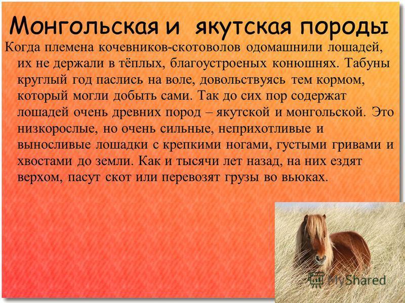 Монгольская и якутская породы Когда племена кочевников-скотоводов одомашнили лошадей, их не держали в тёплых, благоустроенных конюшнях. Табуны круглый год паслись на воле, довольствуясь тем кормом, который могли добыть сами. Так до сих пор содержат л