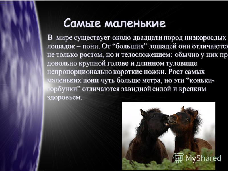 Самые маленькие В мире существует около двадцати пород низкорослых лошадок – пони. От больших лошадей они отличаются не только ростом, но и телосложением: обычно у них при довольно крупной голове и длинном туловище непропорционально короткие ножки. Р