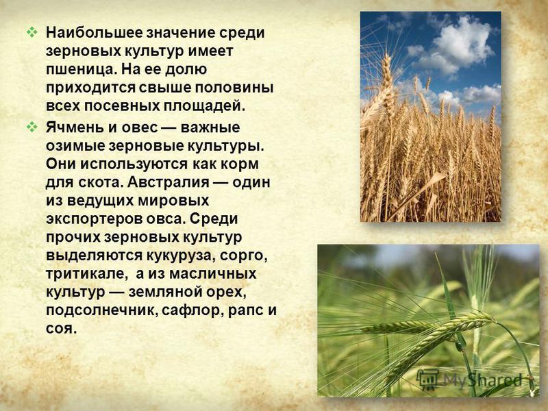 Наибольшее значение среди зерновых культур имеет пшеница. На ее долю приходится свыше половины всех посевных площадей. Ячмень и овес важные озимые зерновые культуры. Они используются как корм для скота. Австралия один из ведущих мировых экспортеров о