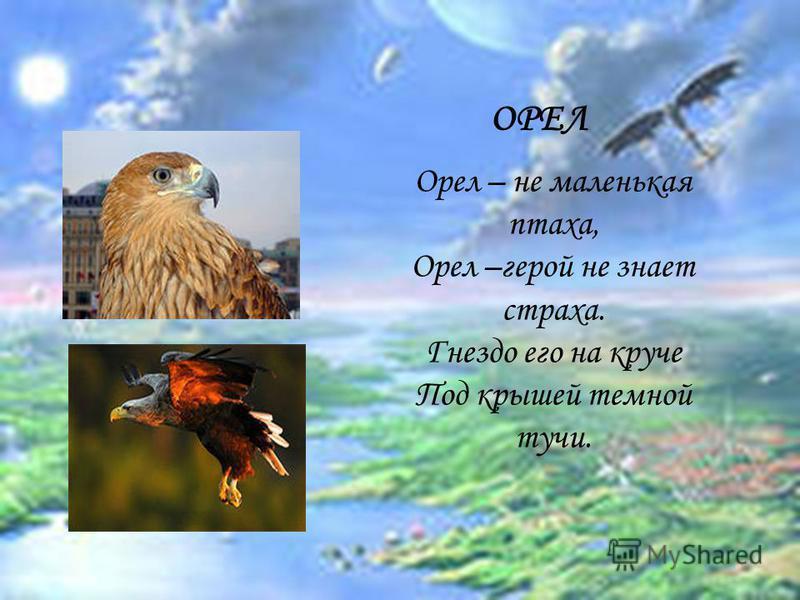 ОРЕЛ Орел – не маленькая птаха, Орел –герой не знает страха. Гнездо его на круче Под крышей темной тучи.
