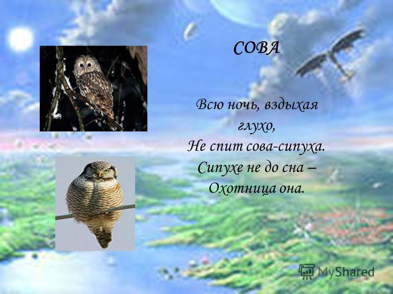СОВА Всю ночь, вздыхая глухо, Не спит сова-сипуха. Сипухе не до сна – Охотница она.
