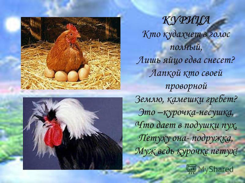 КУРИЦА Кто кудахчет в голос полный, Лишь яйцо едва снесет? Лапкой кто своей проворной Землю, камешки гребет? Это –курочка-несушка, Что дает в подушки пух, Петуху она- подружка, Муж ведь курочке петух !