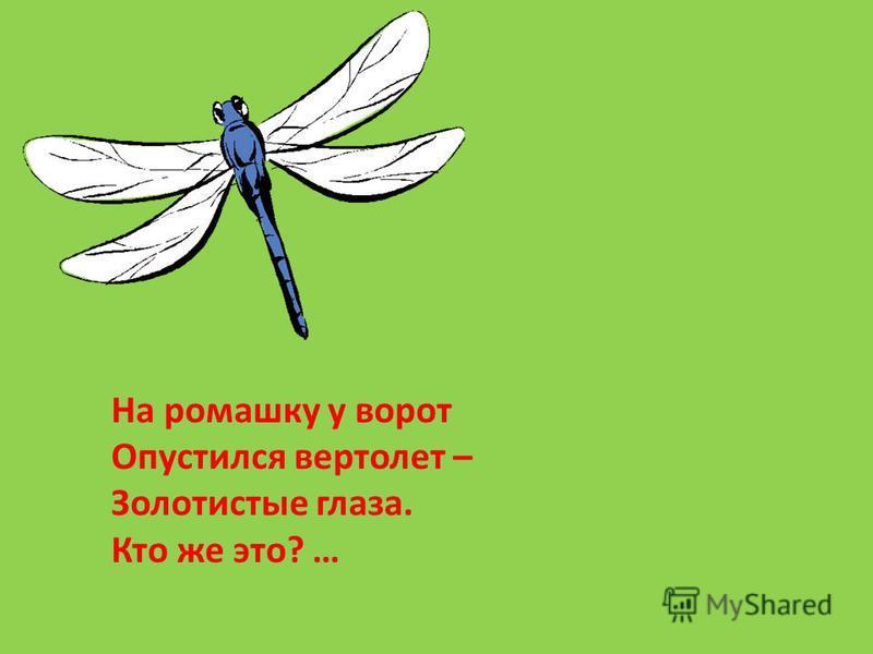 На ромашку у ворот Опустился вертолет – Золотистые глаза. Кто же это? …
