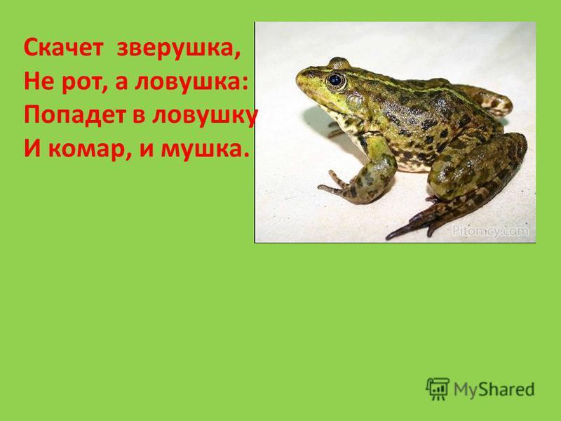 Скачет зверушка, Не рот, а ловушка: Попадет в ловушку И комар, и мушка.