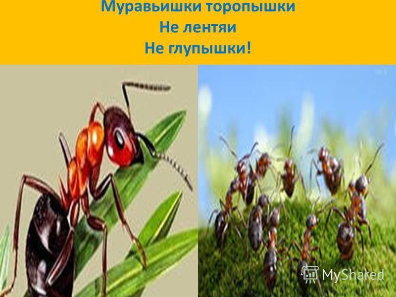 Муравьишки торопыжки Не лентяи Не глупышки!