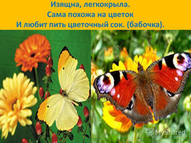 Она ярка, красива, Изящна, легкокрыла. Сама похожа на цветок И любит пить цветочный сок. (бабочка).