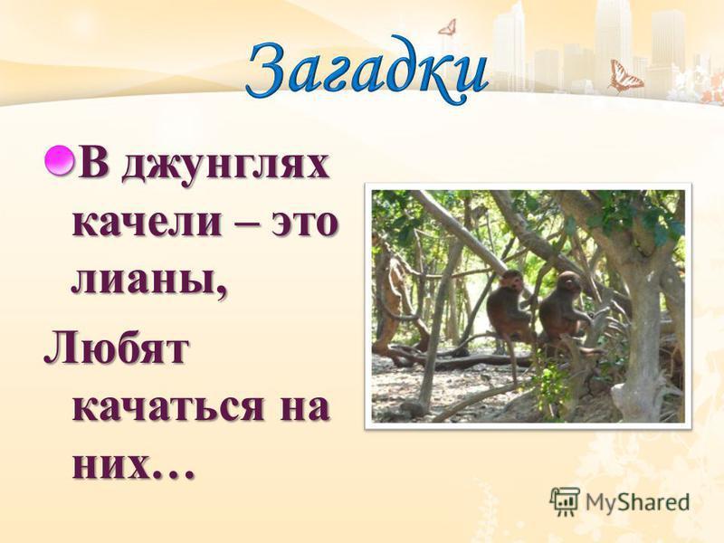 В джунглях качели – это лианы, Любят качаться на них …