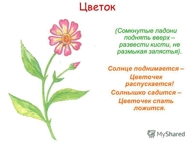 Цветок (Сомкнутые ладони поднять вверх – развести кисти, не размыкая запястья). Солнце поднимается – Цветочек распускается! Солнышко садится – Цветочек спать ложится.