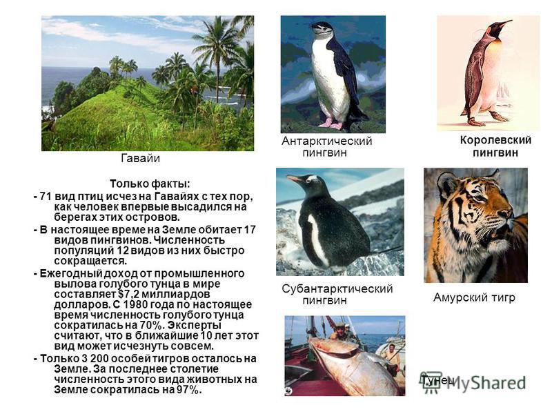 Только факты: - 71 вид птиц исчез на Гавайях с тех пор, как человек впервые высадился на берегах этих островов. - В настоящее время на Земле обитает 17 видов пингвинов. Численность популяций 12 видов из них быстро сокращается. - Ежегодный доход от пр