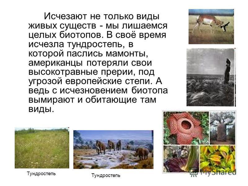 Исчезают не только виды живых существ - мы лишаемся целых биотопов. В своё время исчезла тундростепь, в которой паслись мамонты, американцы потеряли свои высокотравные прерии, под угрозой европейские степи. А ведь с исчезновением биотопа вымирают и о