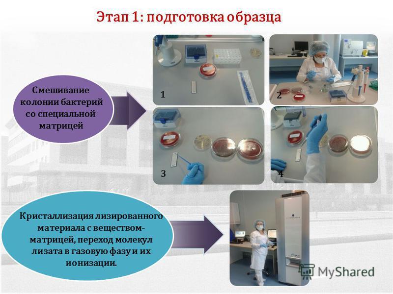 2 34 Смешивание колонии бактерий со специальной матрицей Этап 1: подготовка образца 1 Кристаллизация лизированного материала с веществом- матрицей, переход молекул лизата в газовую фазу и их ионизации.