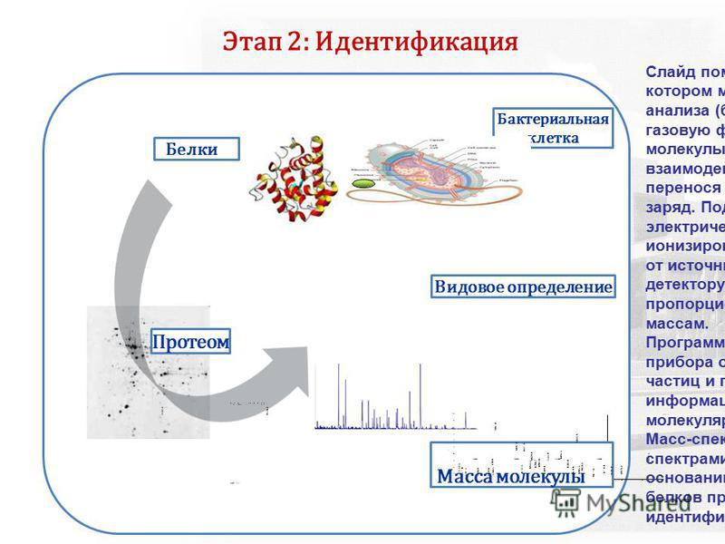 Белки Бактериальная клетка Протеом 30005000 Mass ( m/ z) 700090001100013000 Масса молекулы 2117. 3 0 90 80 70 60 50 40 30 20 10 100 % I n t e n s i t y V o y a g e r S p e c # 1 = > A d v B C ( 3 2, 0. 5, 1. 0 ) = > N F 0. 7 [ B P = 4 4 2 3. 9, 2 1 1