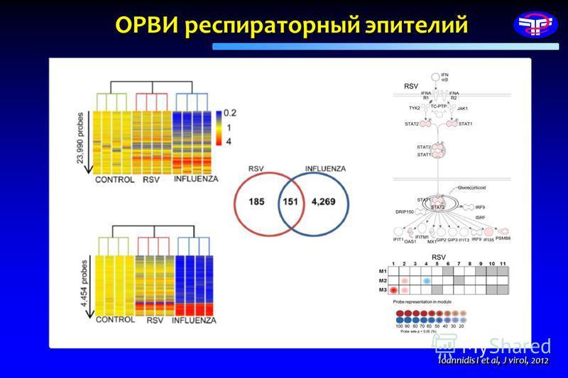 Ioannidis I et al, J virol, 2012 ОРВИ респираторный эпителий