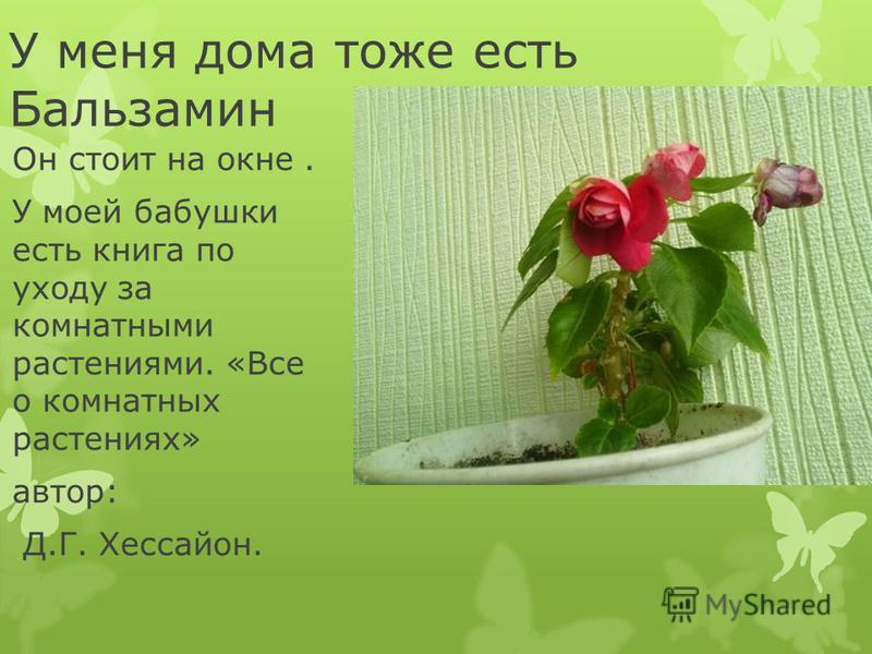 У меня дома тоже есть Бальзамин Он стоит на окне. У моей бабушки есть книга по уходу за комнатными растениями. «Все о комнатных растениях» автор: Д.Г. Хессайон.