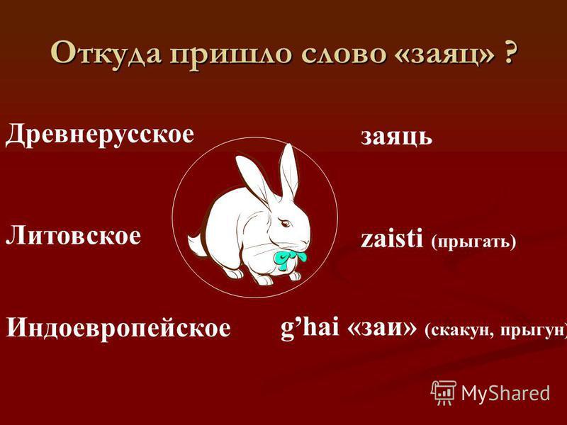 М = ЗК = Ц Не барашек и не кот, Носит шубу круглый год. Шуба серая – для лета, Для зимы – другого цвета. Быстрый прыжок, Тёплый пушок, Ясный глазок.