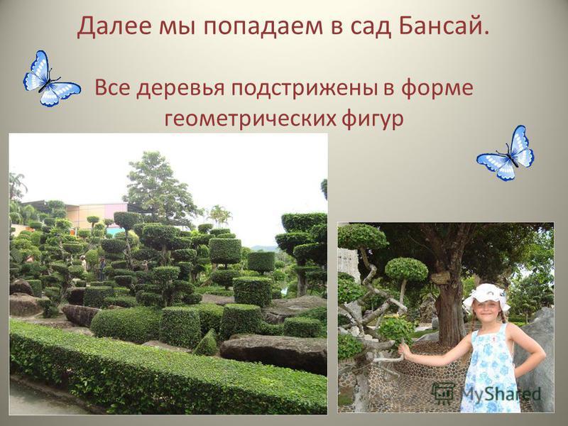 Далее мы попадаем в сад Бансай. Все деревья подстрижены в форме геометрических фигур