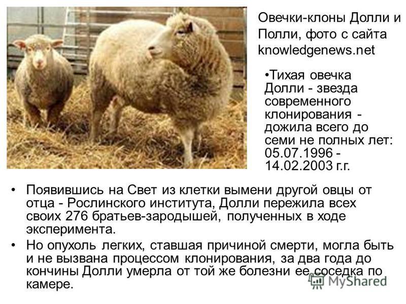 Появившись на Свет из клетки вымени другой овцы от отца - Рослинского института, Долли пережила всех своих 276 братьев-зародышей, полученных в ходе эксперимента. Но опухоль легких, ставшая причиной смерти, могла быть и не вызвана процессом клонирован