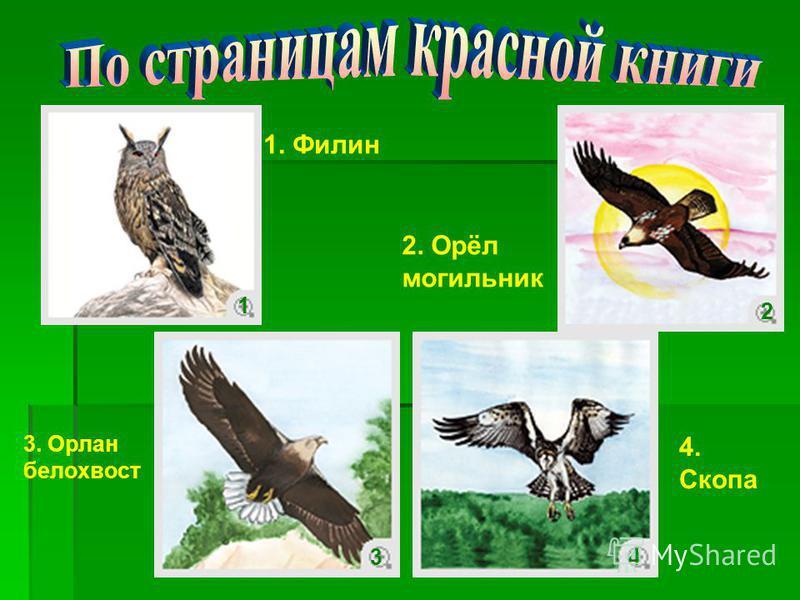 1. Филин 2. Орёл могильник 3. Орлан белохвост 4. Скопа 1 2 34