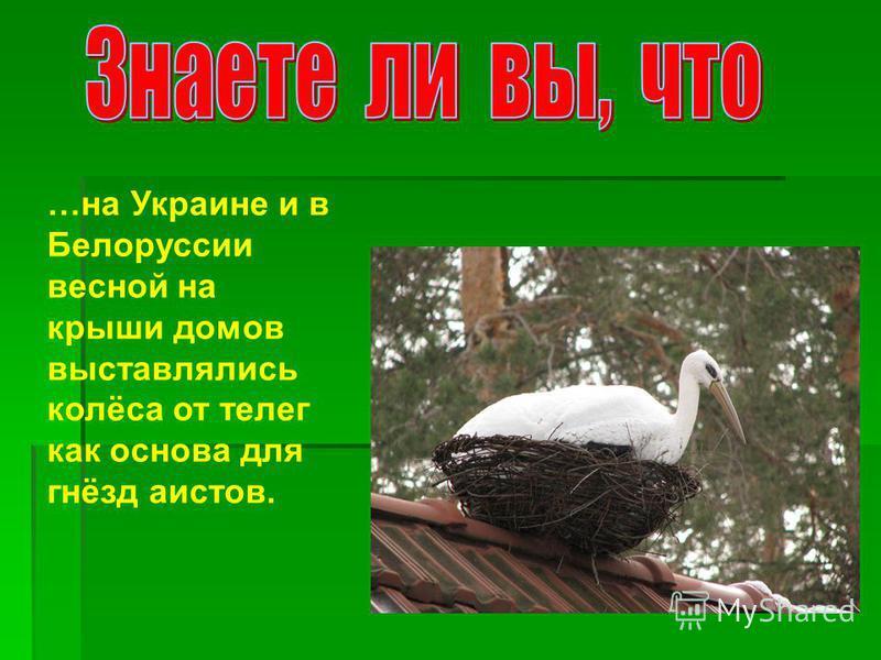 …на Украине и в Белоруссии весной на крыши домов выставлялись колёса от телег как основа для гнёзд аистов.