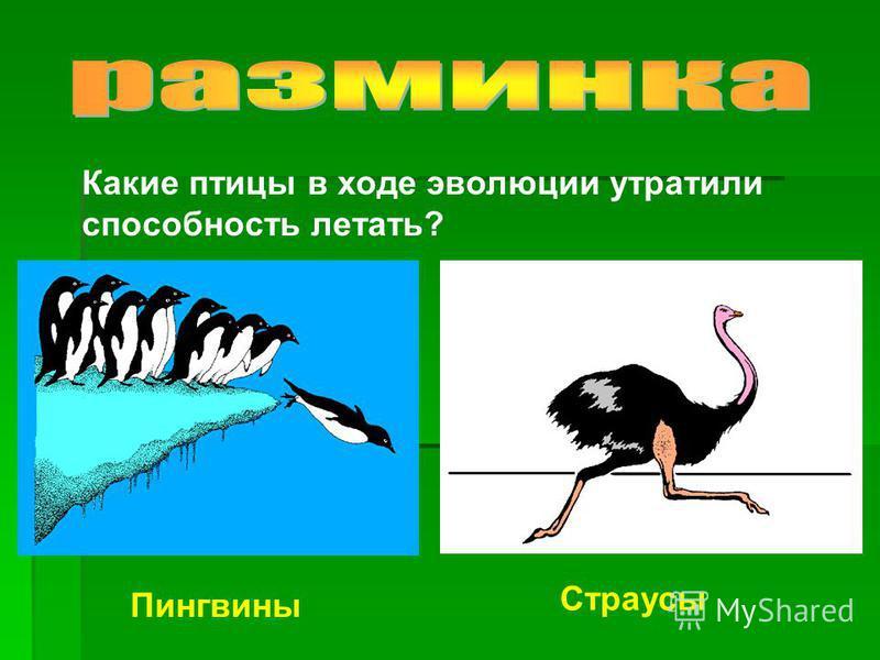 Какие птицы в ходе эволюции утратили способность летать? Пингвины Страусы