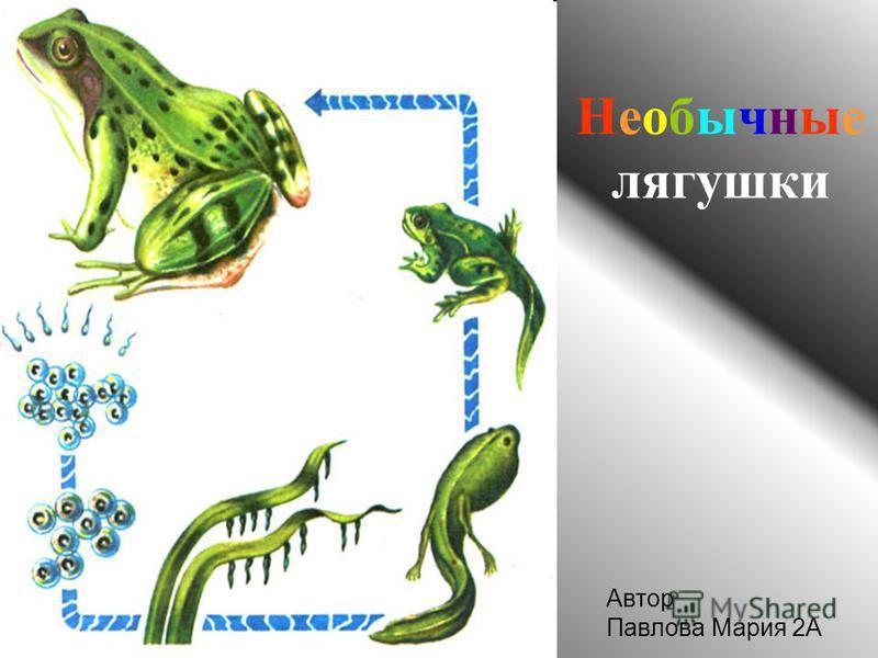 Необычные лягушки Автор Павлова Мария 2А
