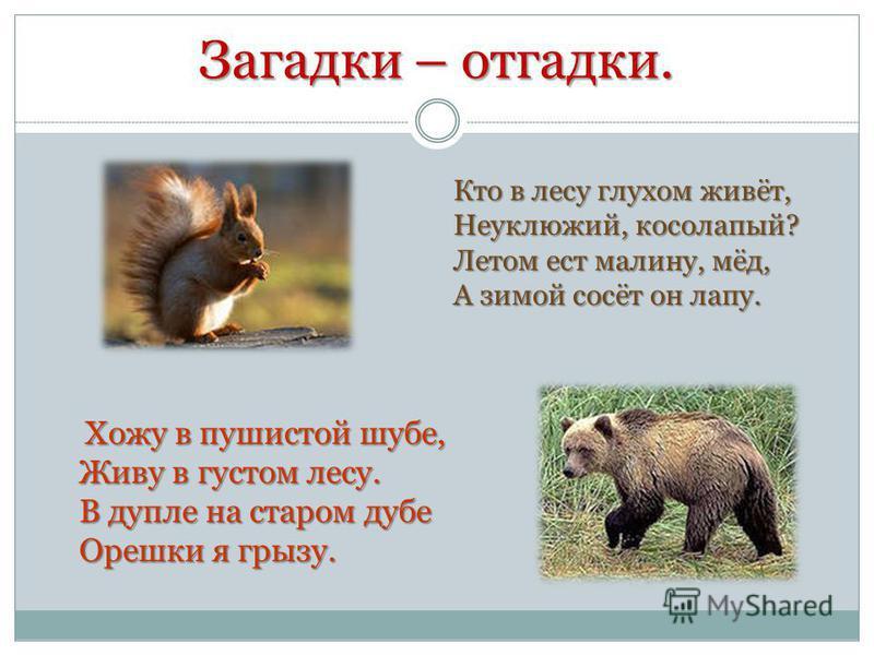 Загадки – отгадки. Хожу в пушистой шубе, Живу в густом лесу. В дупле на старом дубе Орешки я грызу. Кто в лесу глухом живёт, Неуклюжий, косолапый? Летом ест малину, мёд, А зимой сосёт он лапу.