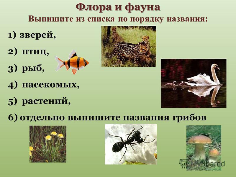 Флора и фауна Флора и фауна Выпишите из списка по порядку названия: 1)зверей, 2) птиц, 3) рыб, 4) насекомых, 5) растений, 6)отдельно выпишите названия грибов