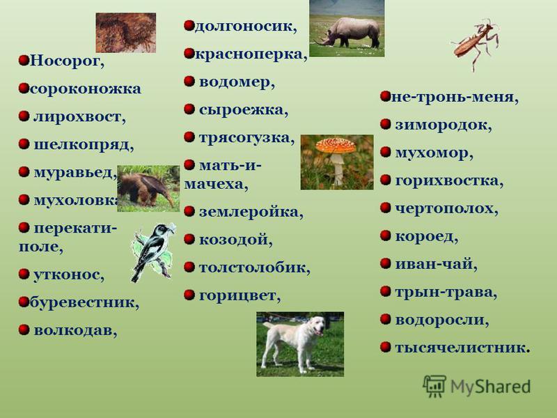 Носорог, сороконожка лирохвост, шелкопряд, муравьед, мухоловка, перекати- поле, утконос, буревестник, волкодав, долгоносик, красноперка, водомер, сыроежка, трясогузка, мать-и- мачеха, землеройка, козодой, толстолобик, горицвет, не-тронь-меня, зимород