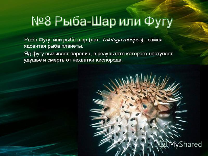 Рыба Фугу, или рыба-шар (лат. Takifugu rubripes) – самая ядовитая рыба планеты. Яд фугу вызывает паралич, в результате которого наступает удушье и смерть от нехватки кислорода.