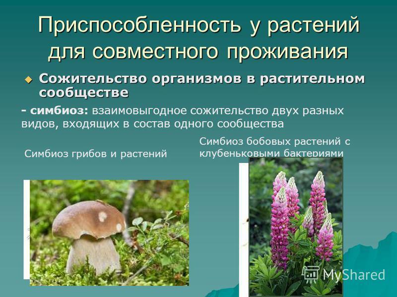 Приспособленность у растений для совместного проживания Сожительство организмов в растительном сообществе Сожительство организмов в растительном сообществе - симбиоз: взаимовыгодное сожительство двух разных видов, входящих в состав одного сообщества