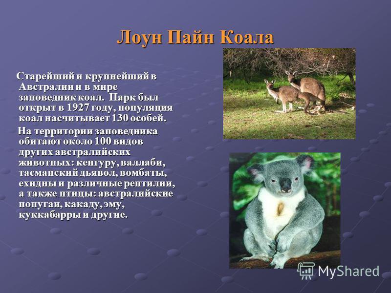 Старейший и крупнейший в Австралии и в мире заповедник коал. Парк был открыт в 1927 году, популяция коал насчитывает 130 особей. Старейший и крупнейший в Австралии и в мире заповедник коал. Парк был открыт в 1927 году, популяция коал насчитывает 130