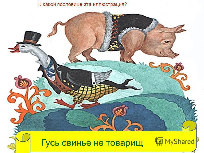 К какой пословице эта иллюстрация? Гусь свинье не товарищ