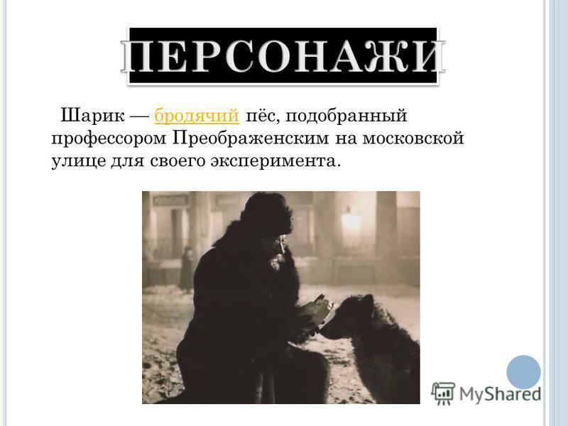 Шарик бродячий пёс, подобранный профессором Преображенским на московской улице для своего эксперимента.бродячий