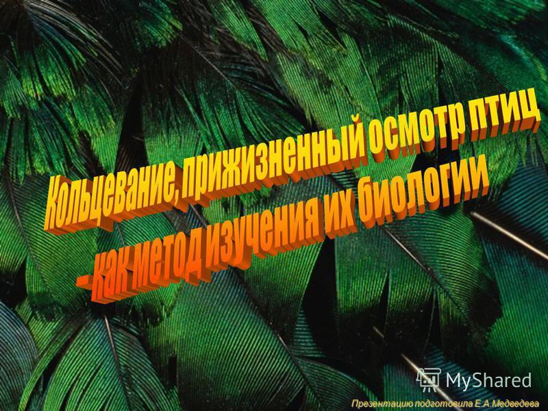 Презентацию подготовила Е.А.Медведева