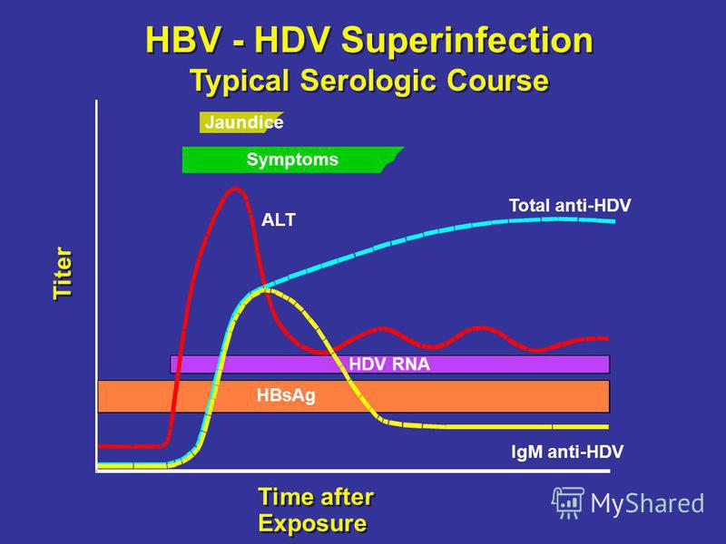 HBV - HDV Superinfection Typical Serologic Course Time after Exposure Titer Jaundice Symptoms ALT Total anti-HDV IgM anti-HDV HDV RNA HBsAg