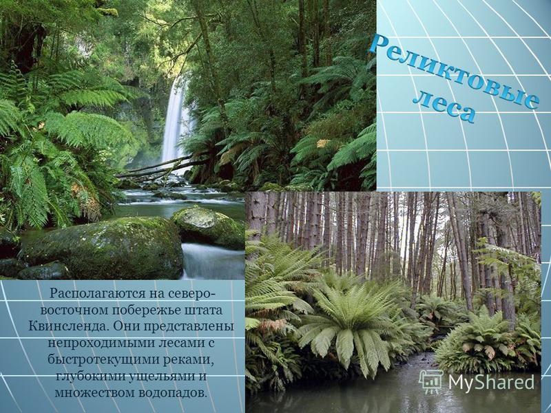Располагаются на северо- восточном побережье штата Квинсленда. Они представлены непроходимыми лесами с быстротекущими реками, глубокими ущельями и множеством водопадов.