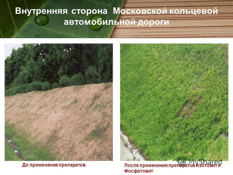 Внутренняя сторона Московской кольцевой автомобильной дороги До применения препаратов После применения препаратов Азотовит и Фосфатовит