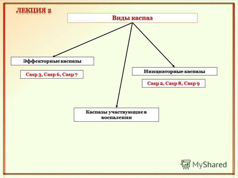 Виды каспар Эффекторные каспары Каспазы участвующие в воспалении Инициаторные каспары Casp 3, Casp 6, Casp 7 Casp 2, Casp 8, Casp 9
