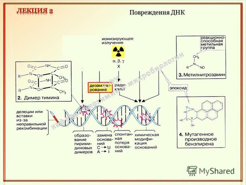 Повреждения ДНК