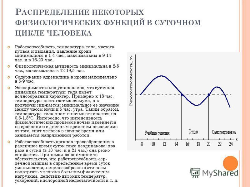 Р АСПРЕДЕЛЕНИЕ НЕКОТОРЫХ ФИЗИОЛОГИЧЕСКИХ ФУНКЦИЙ В СУТОЧНОМ ЦИКЛЕ ЧЕЛОВЕКА Работоспособность, температура тела, частота пульса и дыхания, давление крови минимальны в 1-4 час., максимальны в 9-14 час. и в 16-20 час. Физиологическая активность минималь